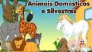 Animais Dom�sticos e Silvestres